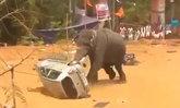 อินเดียเตรียมยิงช้างป่า หลังอาละวาดฆ่าคนแล้ว 15 ราย
