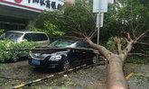 ไต้ฝุ่นฮาโตะถล่มฮ่องกง-มาเก๊า-กวางตุ้งอ่วม เสียชีวิตแล้ว 12 ราย