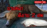 เผยสาเหตุ! คนลงไปช่วยหมาจมน้ำสังเวย 2 ศพ
