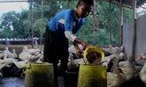 เก่งมาก! เด็กชาย 10 ขวบจันทบุรี เลี้ยงเป็ดขายสร้างรายได้นับหมื่น