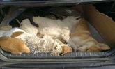 เจ้าของร้านหม้อไฟตระเวนฆ่าสุนัข 8 ตัว เจ้าของรู้ซิ่งรถไล่ตาม