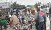 กระบะถูกรถพ่วงชนท้าย! ชาวบ้านเเห่เก็บปลา 3 ตัน กระจายเกลื่อนถนน
