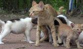 รักต่างสายพันธุ์! แม่แมวใจดีเลี้ยงลูกสุนัขกำพร้า 4 ตัว นอนให้กินนม