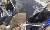 ชาวประมงรัสเซียช่วย 2 ลูกหมีจมน้ำ หลังว่ายข้ามทะเลสาบแล้วเกิดหมดแรง