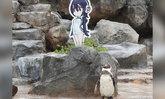 เพนกวินญี่ปุ่นสิ้นลมหายใจข้างๆ การ์ตูนคัตเอาท์ที่หลงรัก