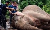 ช้างป่าถูกน้ำป่าซัดคลองชมพู อาการดีขึ้นตามลำดับ