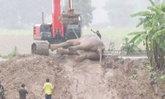 ปฏิบัติการช่วยช้างป่าลอยคอในคลองชมพูสำเร็จแล้ว