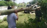 บุกจับหนุ่มมีต้นกระท่อมปลูกในบ้าน อ้างไม่รู้ว่าเป็นต้นกระท่อม