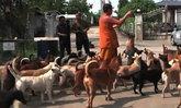 น้ำท่วมวัดเกริน จ.ปทุมธานี กระทบสุนัขจรจัดกว่า 50 ตัว