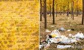 คนจีนบุกเที่ยวป่าใบไม้เปลี่ยนสี แต่กลับทิ้งไว้แค่ขยะกองโต