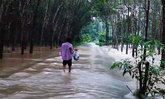 น้ำป่าหลากเข้าท่วมบ้านเรือน สวนยางชาวพัทลุง
