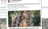 """เคนยาจ่อจับแยก """"สิงโตรักร่วมเพศ"""" โทษคนทำให้สัตว์เลียนแบบ"""