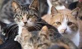 """""""แมวจรจัด"""" ผู้ต้องสงสัยฆาตกรรมยายชาวญี่ปุ่นวัย 82 ปี"""