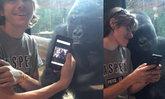 น่าเอ็นดู กอริลลาหนุ่มนั่งดูรูปกอริลลาสาวกับนักท่องเที่ยว