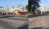 โซเชียลเป็นงง คลิปฝูงม้าวิ่งกลางถนน พิกัดอยู่เชียงใหม่