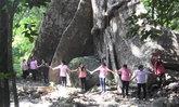 ต้นไม้ยักษ์ 30 คนโอบ กลางป่าในอุทยานฯ เขาพนมเบญจา จ.กระบี่