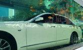 รถหรือของเล่นปลา? โปรโมทรถยนต์แนวใหม่สไตล์เซินเจิ้น