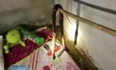 สะเทือนใจ งูเห่าเลื้อยเข้าห้องนอน ฉกกัดเด็กหญิงนอนตายไม่รู้ตัว