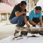 จับตอน! ปศ.ฉีดวัคซีน-ทำหมันหมาแมว เผยต้องขึ้นทะเบียนสัตว์เลี้ยง ใครปล่อยทิ้งมีความผิด