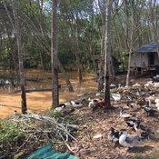 น้ำป่าไหลหลากใน 4 อำเภอในสุราษฎร์ฯ ผู้ป่วยติดเตียงโดนน้ำซัดจมดับ!