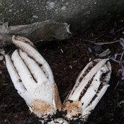 พบเห็ดมือผีชาวบ้านเก็งเลขเด็ด