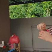แห่จ้องบ้านเลขที่ งูเลื้อยเข้าบ้านหนุ่มนักมายากล วันเดียว 4 รอบ ไล่จับกันวุ่น
