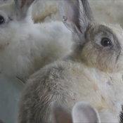 โยมนำกระต่ายกว่า300ตัวถวายวัด ให้คนอยากเลี้ยงนำไปดูแลต่อ