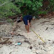 แม่เต่ากระ โผล่วางไข่อ่าวในหุบ เกาะทะลุ ต่อเนื่องเป็นรังที่ 7 นับได้ 155 ฟอง