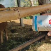 เกษตรกรปิ๊งไอเดียหวังป้องกัน ลัมปีสกิน ซื้อสีมาพ่นคำว่า แมว บนตัววัวแก้เคล็ด