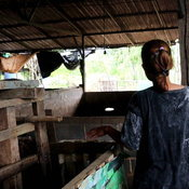 นครพนม (คลิป)ซ้ำเติมเกษตรกรช่วงโควิด โรคเพิร์สระบาดในหมูตายนับ 100 ตัว