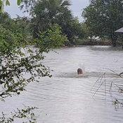พระสุโขทัยจูงควายหนีน้ำ หลังน้ำจากอ่างแม่มอก-แม่ลำพัน ทะลักท่วมหลายพื้นที่
