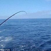 ฉลามตีลังกากลับหลัง