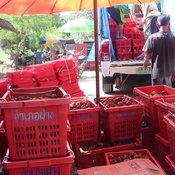 ชาวสวนมังคุดได้เฮ สตก.พังงา ตั้งจุดรับซื้อมังคุดส่งผลราคามังคุดปรับสูงขึ้นกิโลกรัมละกว่า 20 บาท