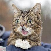 ลิลบับ แมวแลบลิ้น