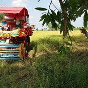 โคราช-ภัยแล้งโคราช กระทบผู้ประกอบการรถเกี่ยวข้าว คิวหาย รายได้หดนับแสนบาท