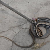 คอหวยต้องส่องงูเลื้อยเข้าบ้านของอดีตราชการเชื่อว่าจะได้โชคลาภ