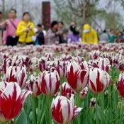 มหกรรมพืชสวนโลกในจีน