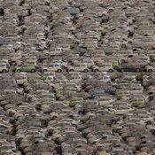 สภาพรถยนต์ฮอนด้า หลังน้ำลด