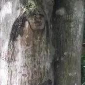 แห่ขอหวยเลขเด็ด ต้นมะม่วงหน้าคน