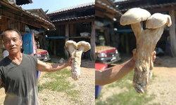 พบเห็ดยักษ์ คล้ายปลัดขิก ชาวบ้านแห่โพสต์ถ่ายรูป ก่อนนำไปต้มกินอิ่มท้อง