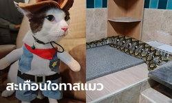 """ช็อกทั้งบ้าน แมวสุดรัก """"น้องโฮจุน"""" ถูกงูเหลือมเขมือบคาครัว ไม่ทันได้ใส่ชุดใหม่"""