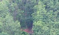 นครศรีฯชาวบ้านกว่า100 ติดบนเขาไม้ไผ่