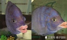 """ชาวเน็ตแห่ไลค์ ปลาสุดแปลกมี """"ริมฝีปาก"""" เหมือนคน"""