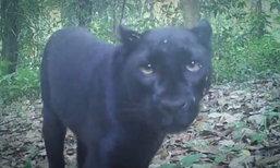 """มูลนิธิสืบฯ เปิดไทมไลน์อนาคตคดี """"เปรมชัย"""" กับพวกล่าเสือดำ"""