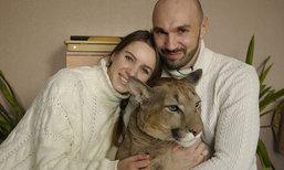 สามีภรรยาชาวรัสเซียเลี้ยง เสือพูม่า ชาวเน็ตเอ็นดูกดติดตามเพียบ