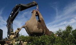ปกป้องยิ่งขึ้น! เคนย่าย้ายโขลงช้างป่า หนีภัยมืดนักล่างา