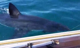 หัวใจจะวาย ครอบครัวออสซี่ออกเรือตกปลา เจอฉลามว่ายระยะประชิด