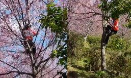 สวยจนลืมมารยาท นักท่องเที่ยวปีนต้นนางพญาเสือโคร่งถ่ายเซลฟี่