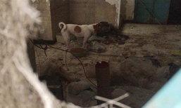 บุกช่วยสุนัขถูกขังในบ้าน 6 ปี ผงะ พบซากสุนัขแห้งกรังติดผ้าห่ม