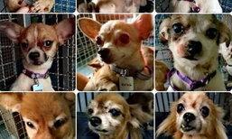 เพจชื่อดังเปิดโปง ฟาร์มเพาะหมาชลบุรี แอบเอาสุนัขปล่อยทิ้งวัด
